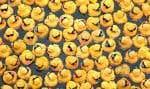 Faut-il renoncer aux canards de bain ou les nettoyer en profondeur après chaque utilisation?