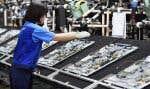 Une ouvrière japonaise assemble des téléviseurs dans une usine de la compagnie Panasonic.