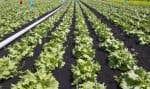 À la ferme expérimentale de Sainte-Clotilde, en Montérégie, des chercheurs d'Agriculture Canada pratiquent l'agriculture de précision.